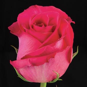 Pink_Floyd-3685-Edit1.jpg