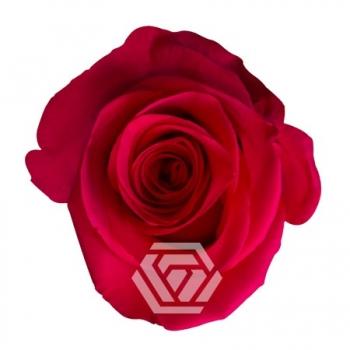 vi-pink-cenital.jpg