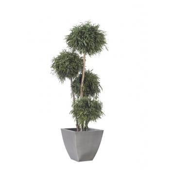 ABN0118-1-topiary-spheres.jpg