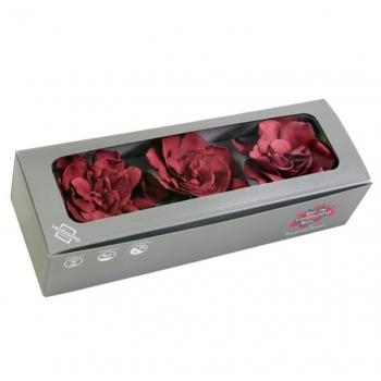 GAR1470-03-gardenia.jpg