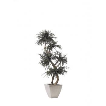 MPA0115-1-topiary-parvifolia-tenuifolium.jpg