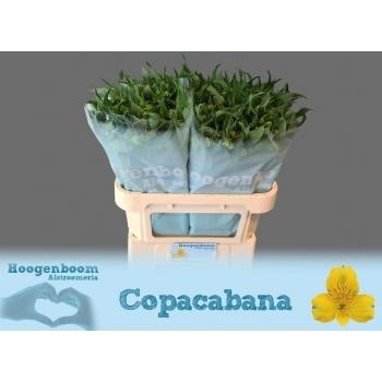 product/img.ozexport.nl/LALSCOP-LIVE_fotos-0xFBB5291B5F0D79A47B67FA190E3B4716E6DA5D48.jpg