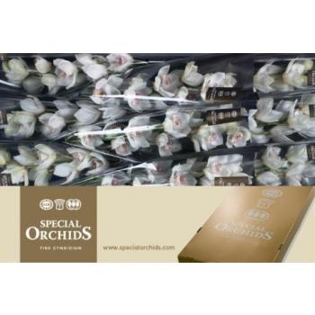 product/img.ozexport.nl/LCYM6NO60-LIVE_fotos-0x9CCF0084090D02CFB700CD6580F7AB383DE0E954.jpg