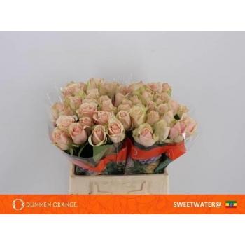 product/img.ozexport.nl/RSWE4-LIVE_fotos-0xF1D13493764FA3DE87C4620F1B4E1D0EE818F490.jpg