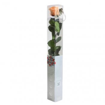 PRZ1550-05-rosa-tallo-standard.jpg