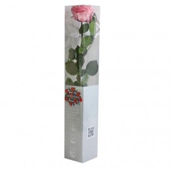 PRZ7420-05-rosa-tallo-premium.jpg