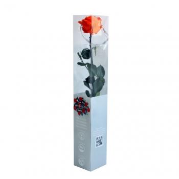 PRZ7530-05-rosa-tallo-premium.jpg