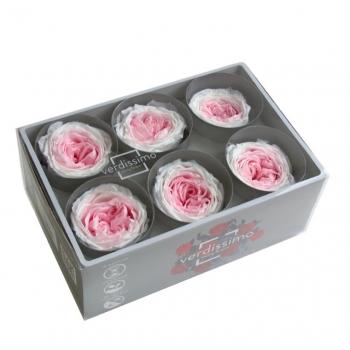 RGAB2040-03-rosa-jardin.jpg