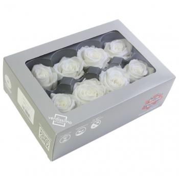 RME3000-03-rosa-medium.jpg