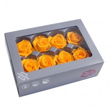 RME3350-03-rosa-medium.jpg