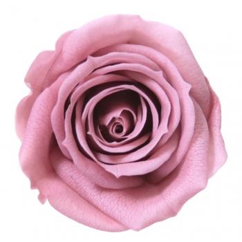 RSM0480-01-rosa-mini.jpg