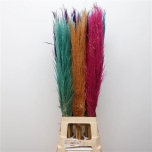 Cortaderia Pamparohi 100cm Evita värvitud mix