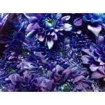 Chrysanthemum Krüsanteem Euro Blue