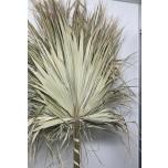 Dried Palm Big 160cm