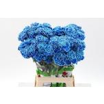 Dianthus Nelk Sinine 65cm