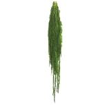 Stabiliseeritud Amaranthus Citron 40/70