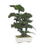 Stabiliseeritud BONSAI JUNIPERUS GDE.