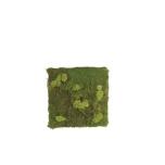 Stabiliseeritud sambla paneel Pole & Flat moss 1x1m
