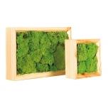 Stabiliseeritud sambla paneel Pole moss wooden frames 15x15cm
