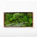 Stabiliseeritud sammal Pole Moss (green)