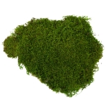 Stabiliseeritud sammal Flat Moss (green) 2.5Kg