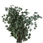 Stabiliseeritud Populus Vert 40/80
