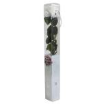 Stabiliseeritud Roos Amorosa Standard Kinkekarbis valge