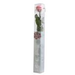 Stabiliseeritud Roos Amorosa Standard Kinkekarbis pastellne roosa