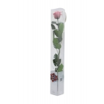 Stabiliseeritud Roos Amorosa Standard Kinkekarbis kirsiõis