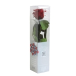 Stabiliseeritud Roos Amorosa Mini Kinkekarbis Burgundy