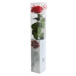 Stabiliseeritud Roos Amorosa Premium Kinkekarbis punane
