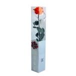 Stabiliseeritud Roos Amorosa Premium Kinkekarbis oranz