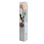 Stabiliseeritud Roos Amorosa Premium Kinkekarbis virsik