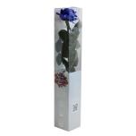 Stabiliseeritud Roos Amorosa Premium Kinkekarbis tumesinine