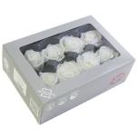Stabiliseeritud Roos Medium 8tk karbis valge