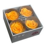 Stabiliseeritud Roos Premium 4tk karbis soe kollane