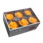 Stabiliseeritud Roos Standard 6tk karbis soe kollane