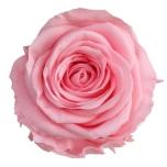 Stabiliseeritud Roos Standard Pastel Pink 1tk