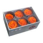 Stabiliseeritud Roos Standard 6tk karbis oranz