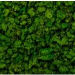 Stabiliseeritud Põdrasammal Raindeer moss tile green 30x60cm