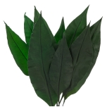 Stabiliseeritud Tropical Leaf 20/30