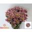 product/img.ozexport.nl/CHRSAB-LIVE_fotos-0x48F90FB4CBBFB48C56A1A2042E64DDCD642FC9EE.jpg