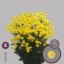 product/img.ozexport.nl/CHRSTAY-LIVE_fotos-0x463D7541484B32F4A2EAC0B2D1FAC9E1F855E832.jpg