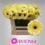product/img.ozexport.nl/GERMSTE-LIVE_fotos-0x2214DBBFCAB02AB11034748EB029867D603D7DEC.jpg