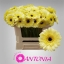 product/img.ozexport.nl/GERMSTE-LIVE_fotos-0x23C8B96A405B9E44BB61BC8BB4565E5219BC424D.jpg