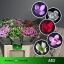 product/img.ozexport.nl/LBOU6-LIVE_fotos-0x166C2B0D1AE079E4428C2B46783527E2E94E8F02.jpg