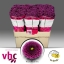 product/img.ozexport.nl/LCHRSANLIT-LIVE_fotos-0xF3E3AF0B8A71F5B56F710D33C43933F8396D73C6.jpg