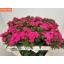 product/img.ozexport.nl/LDIABARNEC5-LIVE_fotos-0x1957E1BEDAD188BC3F040C285A7E1F1894A0503B.jpg