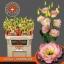 product/img.ozexport.nl/LEUSALCHA-LIVE_fotos-0x2E941DB55CC0C44D48F7905FF738467D27D3653D.jpg