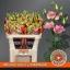 product/img.ozexport.nl/LEUSMEGLIGC-ASSORTI_fotos-MVA-van Wijk - megalo light champagne.jpg